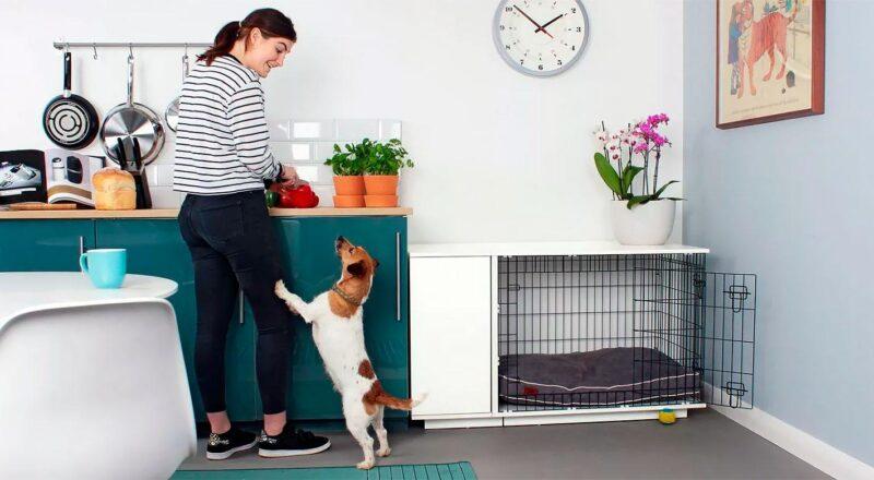 Особенности ремонта с домашними животными